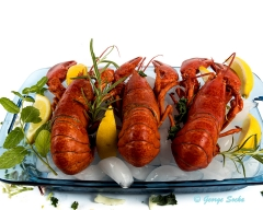 Lobsters on ice - food